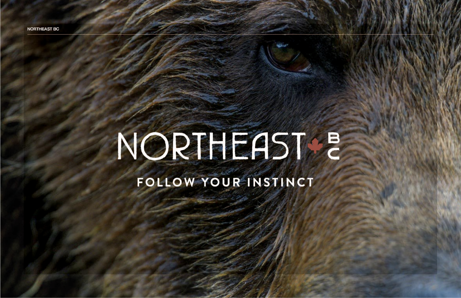 Northeast BC - Follow your instinct (picture of bear)