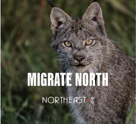 social post: Migrate North